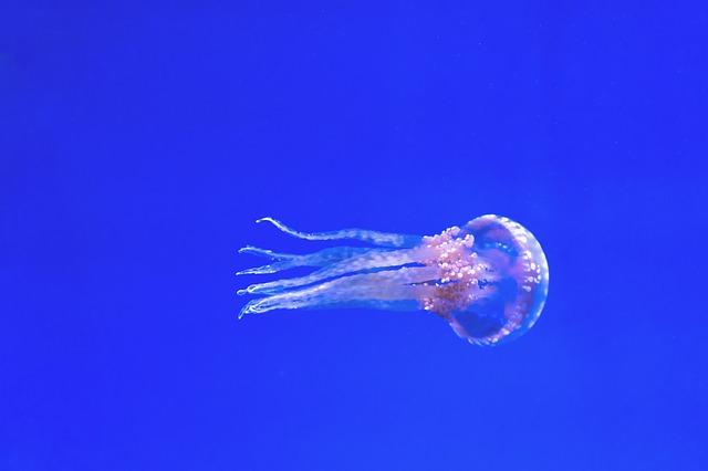 růžová medúza